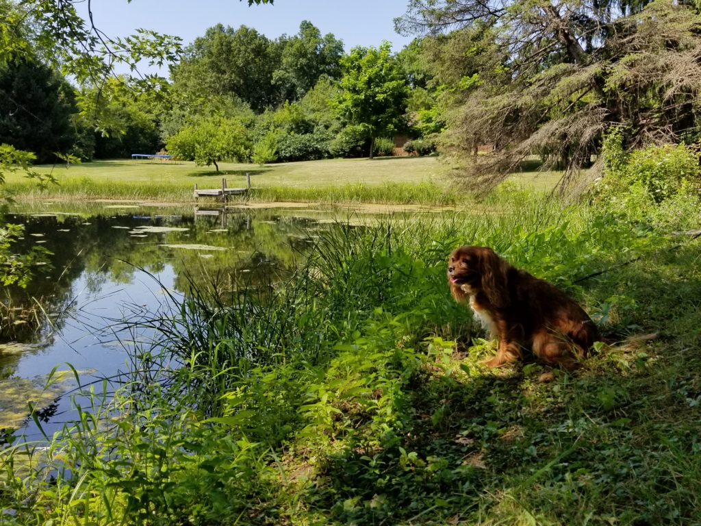 Open space for your dogs